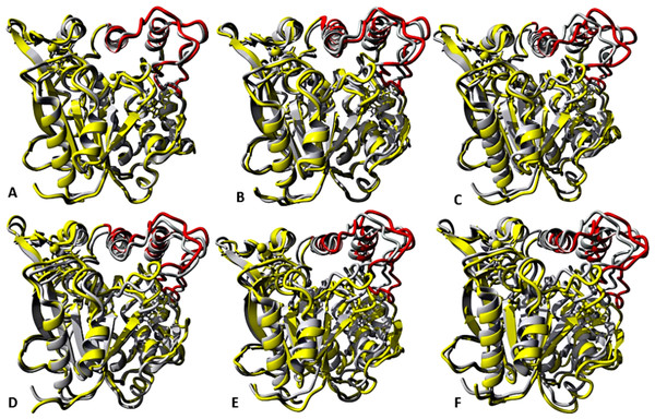representative structures of the last 40 ns of T1 lipase (yellow) in different solvent mixtures (A) H2O, (B) MtOH-H2O, (C) EtOH-H2O, (D) PrOH-H2O, (E) BtOH-H2O and (F) PtOH-H2O superposed with the reference crystallographic structure (gray).