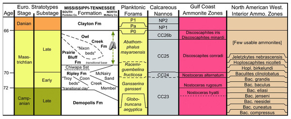 Stratigraphic chart of Maastrichtian deposits in northeast Mississippi.