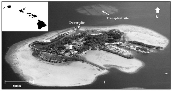 Aerial photograph showing location of the donor site (channel) and transplant site for corals in south Kāne'ohe Bay, O'ahu, Hawai'i.