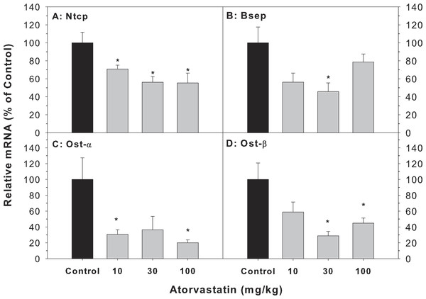 Effects of atorvastatin treatment on mRNA expression of bile acid transporters.