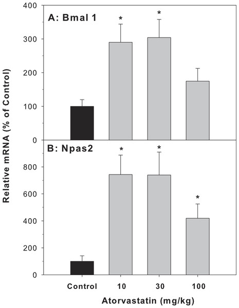 Effects of atorvastatin treatment on mRNA expression of clock core master genes Bmal1 and Npas2.