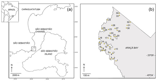 Map showing the location of the study area (A) and the sampling sites in the intertidal area of Araçá Bay (B).