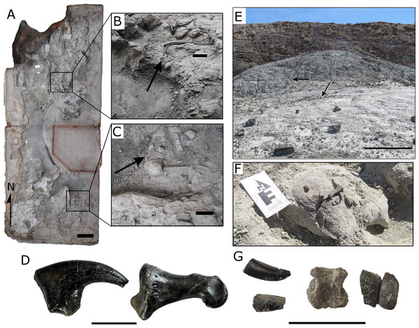 Fossils and characteristics of the Cleveland-Lloyd Dinosaur Quarry and the Johnsonville site.
