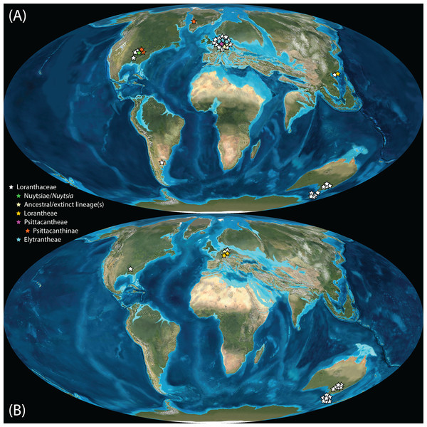 Global distribution of Loranthaceae in the Paleogene, evidenced based on unequivocal palynological records.