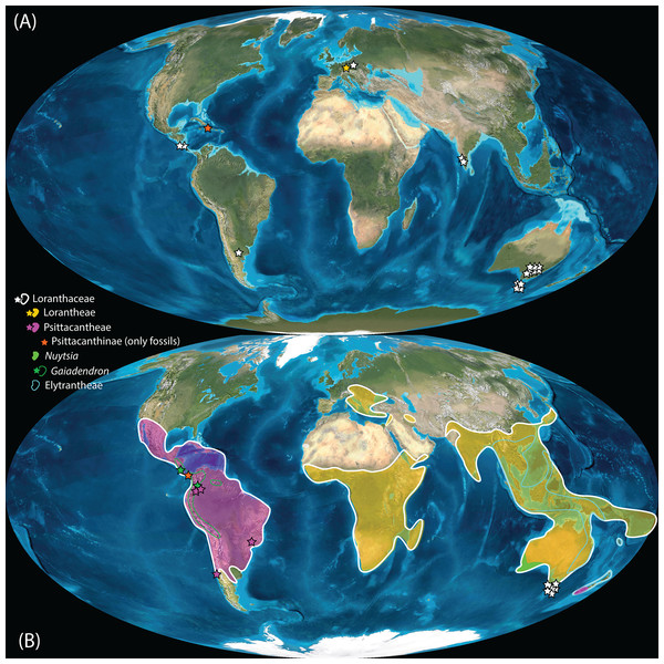 Global distribution of Loranthaceae in the Neogene, evidenced based on unequivocal palynological records.