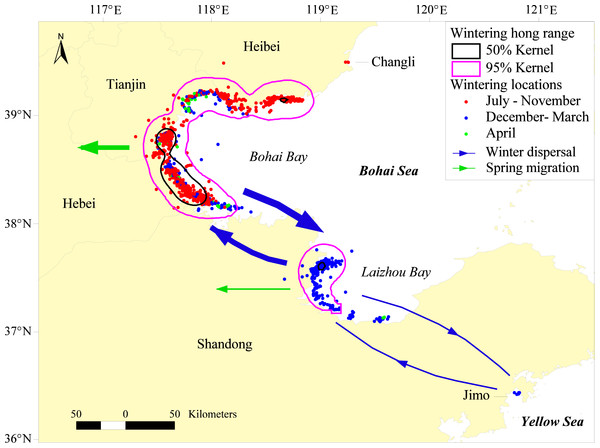 Wintering home range and wintering dispersal of satellite-tracked Relict Gulls on Bohai Bay and Laizhou Bay from 2008–2012.