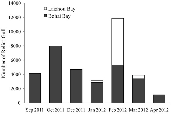 Number of wintering Relict Gulls on Bohai Bay and Laizhou Bay by month from 2011–2012.