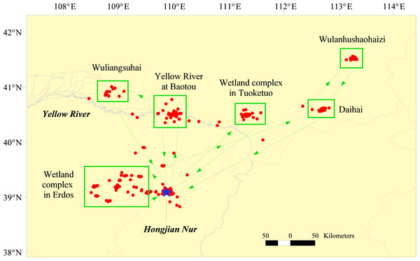 Pre-breeding dispersal sites and direction of satellite-tracked Relict Gulls after returning to Hongjian Nur during the spring migration from 2009–2012.