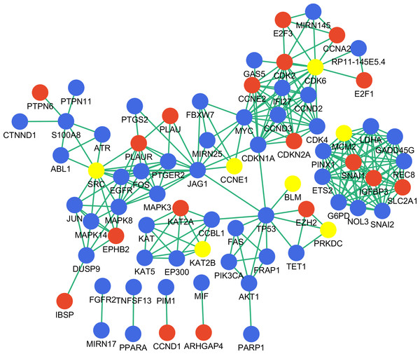 Disease-associated gene network constructed with key genes.