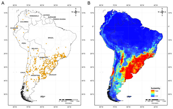 Distribution of Biomphalaria peregrina in South America.