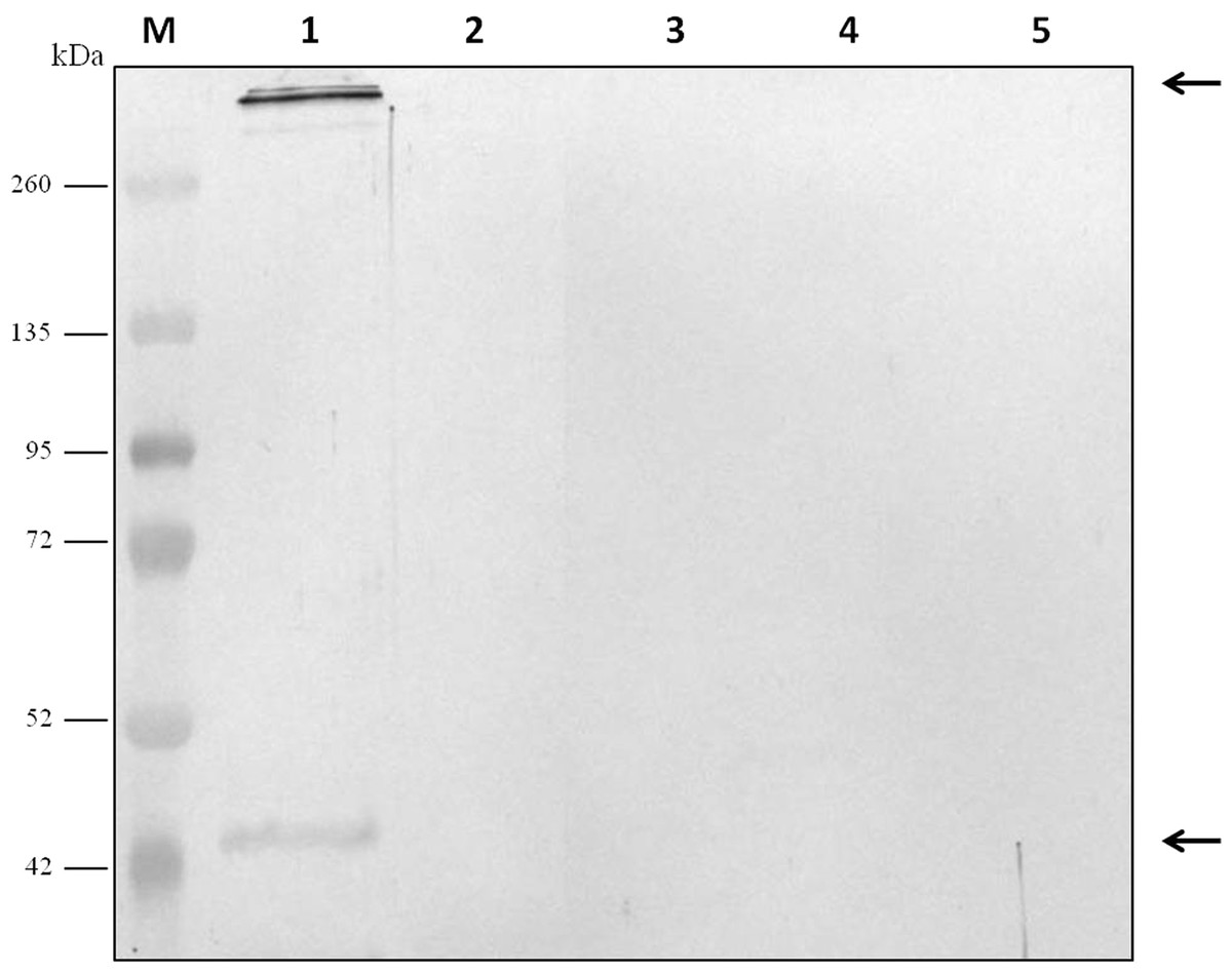 A Simple Electroelution Method For Rapid Protein Purification - Biodot Net Developer Cover Letter
