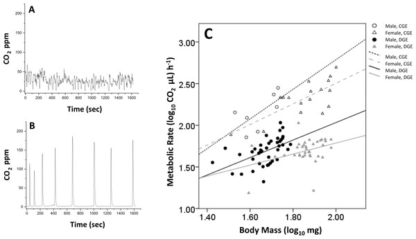 Example of continuous (A) and discontinuous patterns of gas exchange (B). Scaling relationship between metabolic rate and body mass for male (circles) and female (triangles) bees engaged in continuous (CGE, open shapes) versus discontinuous (DGE, filled shapes) gas exchange (C).