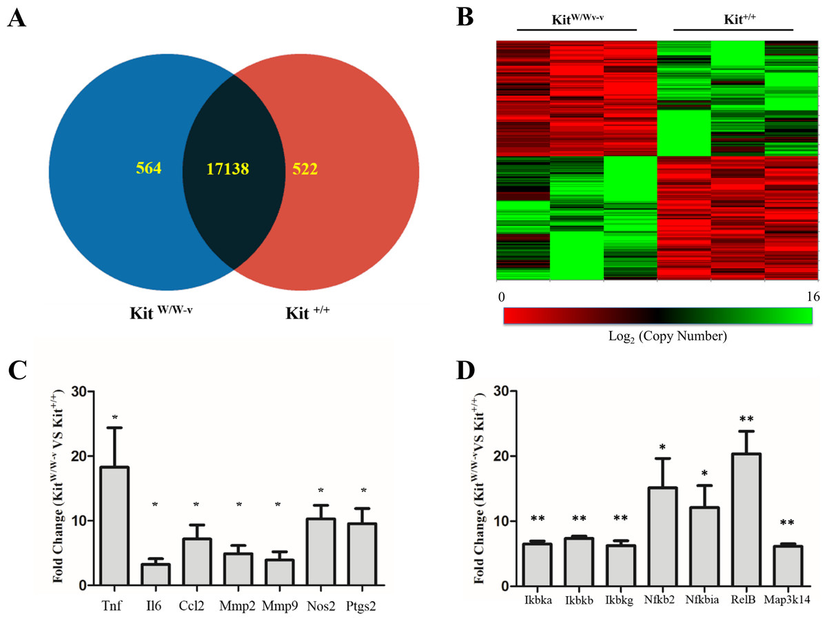 C Kit Modifies The Inflammatory Status Of Smooth Muscle Cells Peerj
