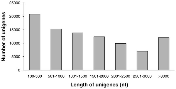 The length distribution of unigenes.