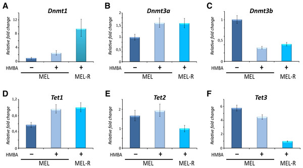 High and low expression of Dnmt1 and Tet3, respectively, are related to gene silencing and DNA methylation in MEL-R cells.