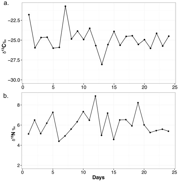 Variability in δ13C (A) and δ15N (B) values of meerkat feces over the month of sampling.