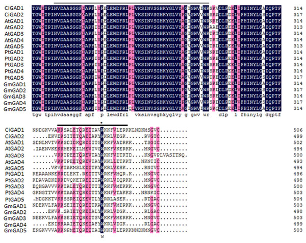 Alignment of the deduced amino acid sequence of two CiGADs in Caragana intermedia with the deduced amino acid residues of GADs in Arabidopsis thaliana, Populus trichocarpa, Glycine max.