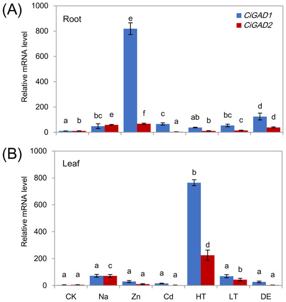 Stress-specific expression of two CiGADs in roots and leaves of young Caragana intermedia seedlings under different stress treatments for 3 h.