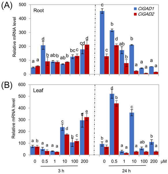Effects of ABA on CiGADs' expression in roots (A) and leaves (B) of young Caragana intermedia seedlings under 200 mM NaCl treatment for 3 and 24 h.