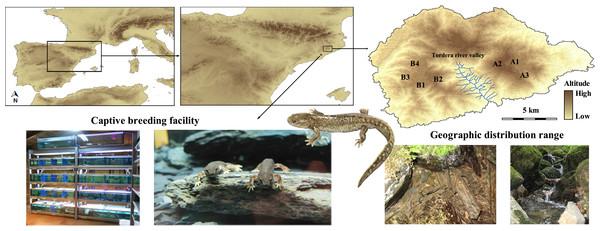 Location of the Calotriton arnoldi distribution range and the captive breeding facility.