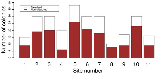 Frequency of bleached and non-bleached colonies of massive Porites recorded at each site.