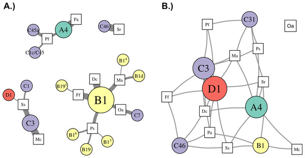 Network analysis of dominant and background symbionts.