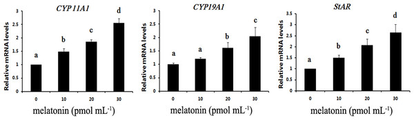 Effects of melatonin supplementation on expression of CYP 11A1, CYP19A1 and StAR in COCs.