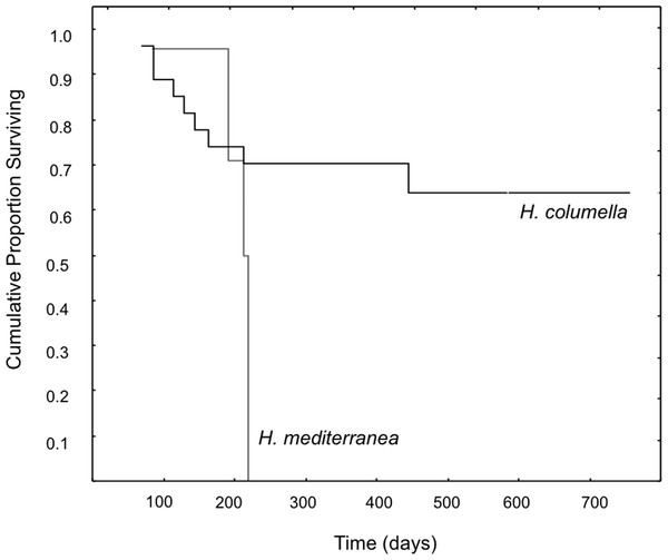 Survival curves of H. columella and H. mediterranea (Wilcoxon test, p<0.005).