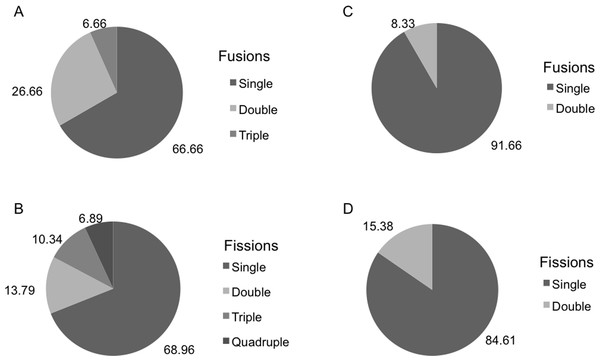 (A, B) Percentage of H. columella individuals showing from one to four fusions or fissions. (C, D) Percentage of  H. mediterranea individuals showing single or double fusions and fissions. Single, double, and triple fission and fusion events.