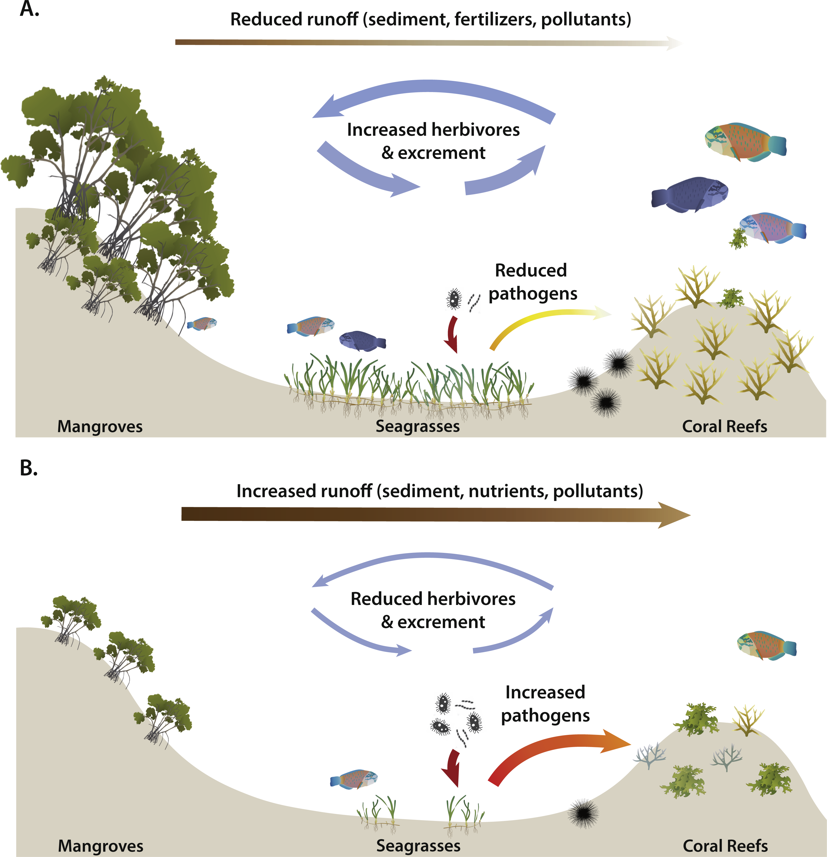 Time To Cash In On Positive Interactions For Coral Restoration Peerj