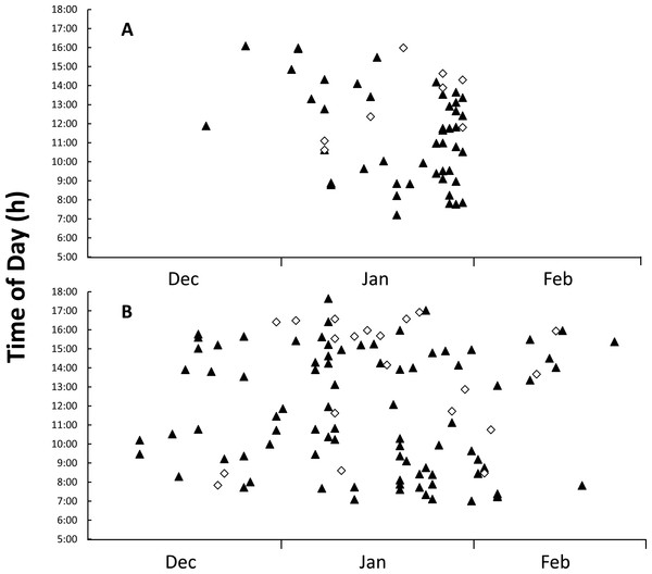 Figure of time and date of goanna appearances at loggerhead turtle nests as determined from camera trap records.