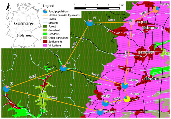 "Schematic overview of the core study area in southern palatinate between ""Neustadt an der Weinstraße"" (north of P1) and ""Landau in der Pfalz"" (south of P6) with median pairwise FST values for selected pond population pairs."