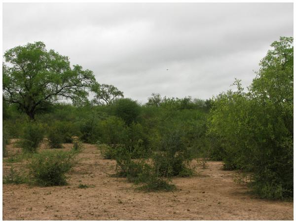 Habitat of Homonota septentrionalis.