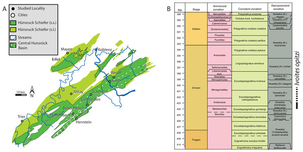 Geographic and Stratigraphic Context.