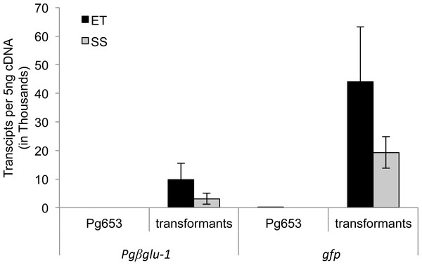 LRE-qPCR quantification of transgene expression in embryonic tissue (ET) and somatic seedlings (SS) of transformed lines.