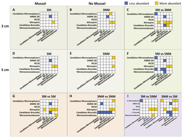 Image of N-cycle phylotype comparisons between treatments.