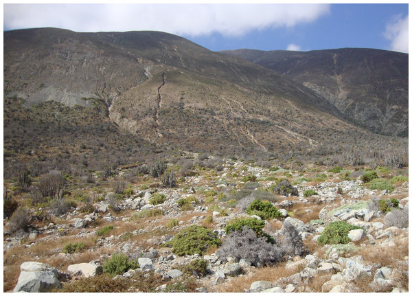 Type locality and habitat of Scutalus chango sp. n.: under boulders at foothills of the Chilean Coastal Range (SE view), north of Paposo, Región de Antofagasta, northern Chile.