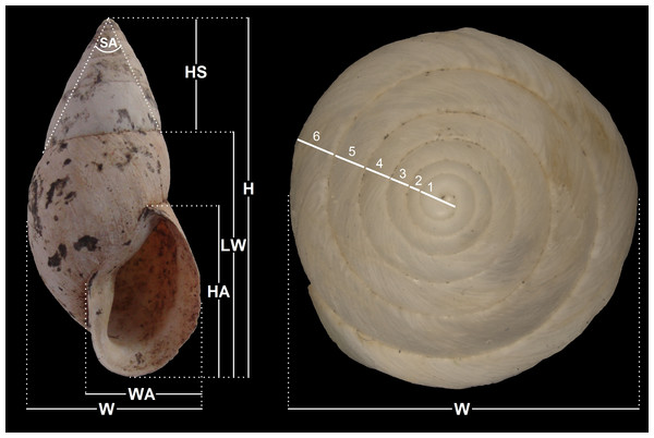 Measurements performed on shells.