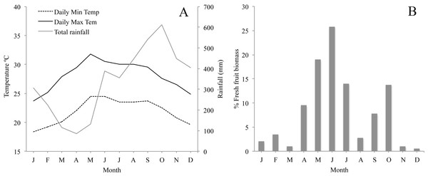 (A) Monthly average minimum and maximum temperature and rainfall in the study area for the study period; and (B) Plant phenology in Los Tuxtlas adapted from Dunn, Cristóbal-Azkarate & Veà (2010) showing percentage of fresh fruit biomass each month.