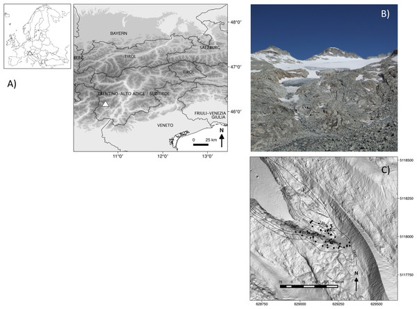 (A) Location of the study area (triangles), (B) image of the glacier foreland in 2011, and (C) a map of how the glacier has retreated from 1945 (external isochrones) to 2006 (date of the digital terrain model used as a base map), with the positions of the 46 1 m × 1 m-plots (black dots).