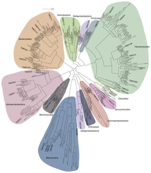 FastTree approximate maximum-likelihood phylogenetic tree constructed with 37 and 406 16S rRNA genes from putative draft genomes and references, respectively.