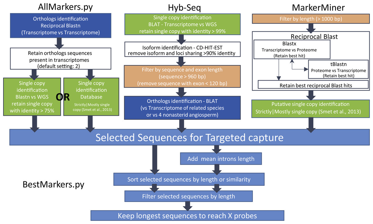 What Does Hyb Mean >> Targeted Ngs For Species Level Phylogenomics Made To Measure Or