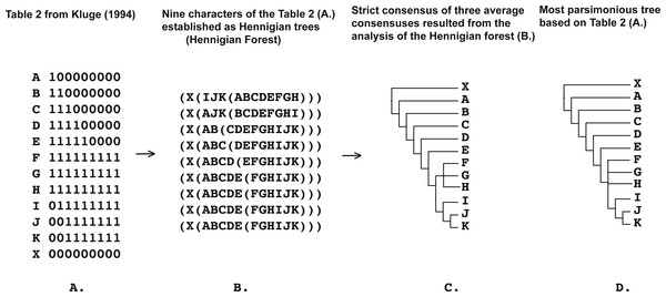 (A) Table 2 modified from Kluge (1994: p. 408); (B) nine characters of the Table 2 from Kluge (1994: p. 408) (A) established as a Hennigian trees; (C) strict consensus of three average consensuses of the score 0.27118 resulted the analysis of the forest (B); (D) most parsimonious tree of the length = 11 (CI = 0.8182, RI = 0.9429) based on the Table 2 from Kluge (1994: p. 408). Tree was a posteriori rooted relatively taxon X.