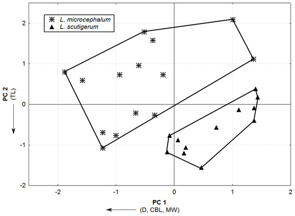 Principal Component Analysis scatterplot showing the distribution of L. microcephalum and L. scutigerum specimens on the multivariate space through the two main axis of variation (PC1 and PC2).