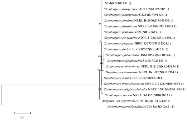 Neighbor-joining phylogenetic tree of strain NJ-4 based on 16S rRNA gene sequence generated by MEGA 5.0.