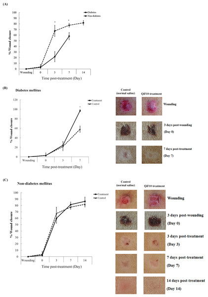 Wound healing response in diabetic and non-diabetic groups.
