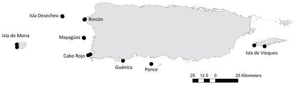 Location of 16 reef stations from eight areas in Puerto Rico: Isla Desecheo, Isla de Mona, Rincón, Mayagüez, Cabo Rojo, Guánica, Ponce, and Isla de Vieques.