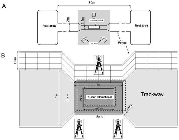Schematic of the trackway.