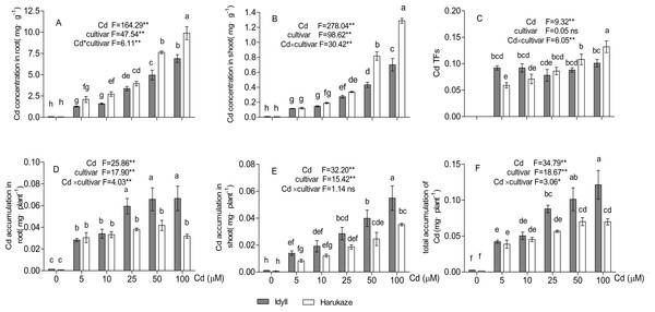Cadmium concentration, translocation factors (TFs) and cadmium accumulation in two cultivars of Italian ryegrass.