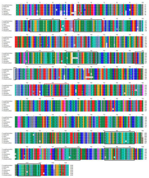 Multiple alignment of three Cherax Na+/K+-ATPase α-subunit amino acid sequences with other crustaceans.